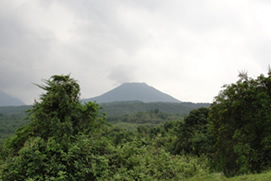 Bwindi Mountain Forest