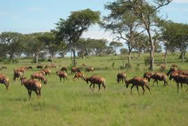 Rwanda-Wildlife-Safaris