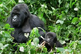 7 Days Gorilla Trek and Wildlife Tour