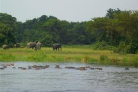 Elephant- hippos