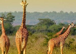 Cheap Rwanda Safaris-Akagera National Park