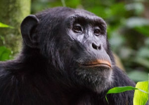 5 Days Primate Safari Tour
