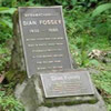 Gorillas and Dian Fossey Tour in Rwanda