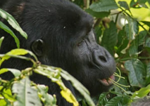 5 Days Gorillas & Lake Bunyonyi