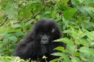 Cheap Rwanda Tours